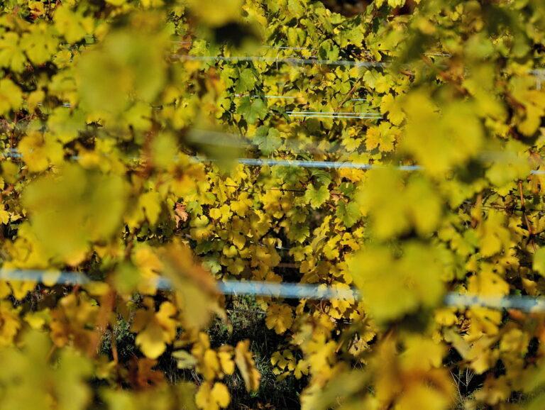 Vignoble Verdesse - Le Mas du Bruchet